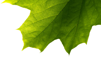 Groen blad Amissio